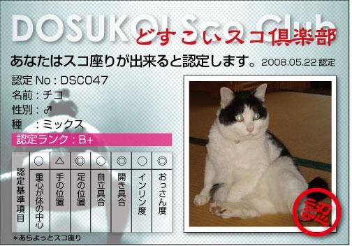 sco46.jpg